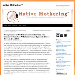 An Explanation of The Enteromammary Secretory Host Immune System: How A Mother's Immune System is Shared Through Breast Milk - Native Mothering™Native Mothering™