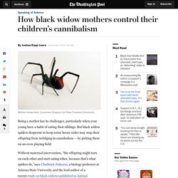 How black widow mothers control their children's cannibalism