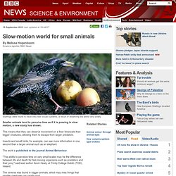 Slow-motion world for small animals