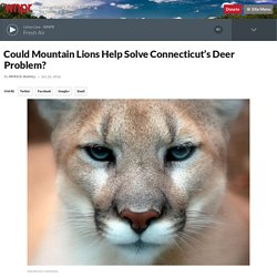 Could Mountain Lions Help Solve Connecticut's Deer Problem?