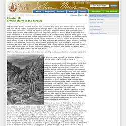 A Wind-storm in the Forests, Chapter 10, 'The Mountains of California' by John Muir (1894) - The Writings of John Muir - John Muir Exhibit (John Muir Education Project, Sierra Club California)