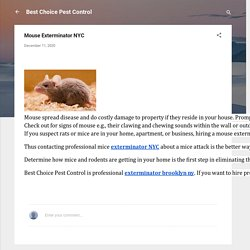 Mouse Exterminator NYC