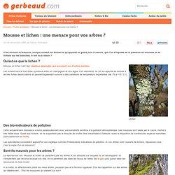 Mousse et lichen : parasites des arbres et arbustes ?
