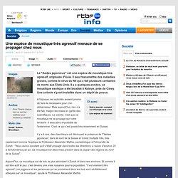 RTBF 27/10/11 Une espèce de moustique très agressif menace de se propager chez nous (Aedes japonicus)