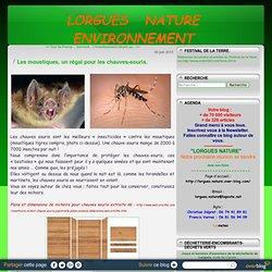 Les moustiques, un régal pour les chauves-souris. - Lorgues, le blog des amis de la nature