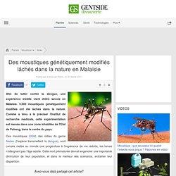 MAXISCIENCES 05/02/11 Des moustiques génétiquement modifiés lâchés dans la nature en Malaisie