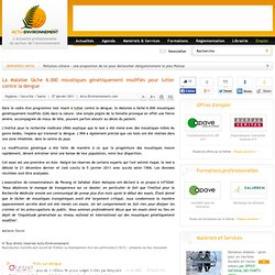 ACTU ENVIRONNEMENT 27/01/11 La Malaisie lâche 6.000 moustiques génétiquement modifiés pour lutter contre la dengue
