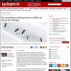 LE POINT 14/10/10 Des moustiques génétiquement modifiés au chevet de la dengue
