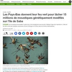 AFP 25/07/17 Les Pays-Bas donnent leur feu vert pour lâcher 15 millions de moustiques génétiquement modifiés sur l'île de Saba