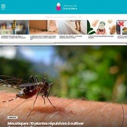Moustiques : 10 plantes répulsives à cultiver dans son jardin ou en pot