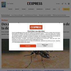 L EXPRESS 17/01/20 Des moustiques OGM résistent aux virus de la dengue