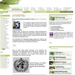 ACTUALITES NEWS 09/08/11 Des moustiques stériles pour éradiquer la malaria