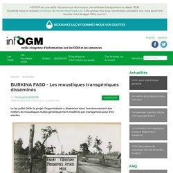 BURKINA FASO - Les moustiques transgéniques disséminés