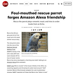 Foul-mouthed rescue parrot forges Amazon Alexa friendship