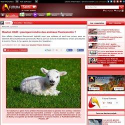 Mouton OGM : pourquoi rendre des animaux fluorescents ?