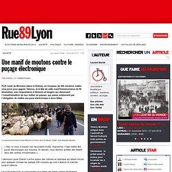RUE89 30/01/13 Une manif de moutons contre le puçage électronique