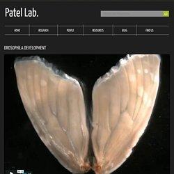 Patel Lab.