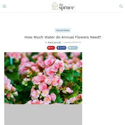 How Much Water do Annual Flowers Need?