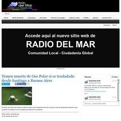 Temen muerte de Oso Polar si es trasladado desde Santiago a Buenos Aires
