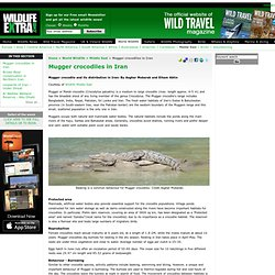 Mugger crocodiles in Iran