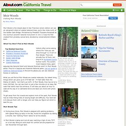 Muir Woods - Guide to Visiting Muir Woods - Mill Valley California