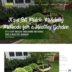 It's a Bit Mulch: Mulching Methods for a Healthy Garden