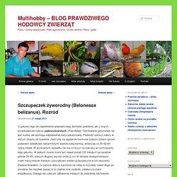 Ryby i rośliny akwariowe, Ptaki egzotyczne, Oczko wodne, Płazy i gady