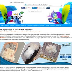 Multiple Uses of the Ostrich Feathers