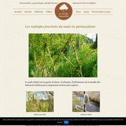 Les multiples fonctions du saule en permaculture