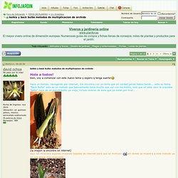 keikis y back bulbs metodos de multiplicacion de orchids