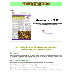 Méthodes de multiplication des abeilles et amélioration du cheptel apicole