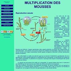 Multiplication des mousses