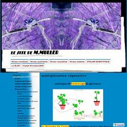 multiplication végétative - le site de M.MULLER