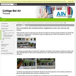 Collège Bel Air - Des exemples de multiplication végétative avec les classes de 6ème