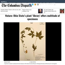 Nature: Ohio State's plant 'library' offers multitude of specimens - Entertainment & Life - The Columbus Dispatch - Columbus, OH