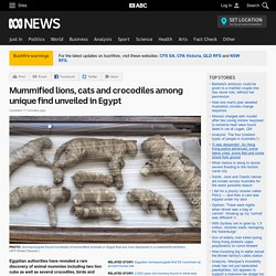 Mummified lions, cats and crocodiles among unique find unveiled in Egypt