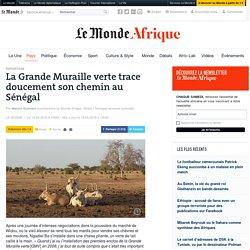 La Grande Muraille verte trace doucement son chemin au Sénégal