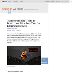 'Murdersquishing' Them To Death: How Little Bees Take On Enormous Hornets : Krulwich Wonders...