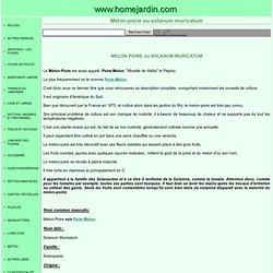 Melon poire ou solanum muricatum, fiche technique complète