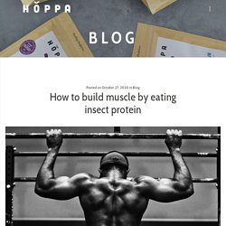 How to build muscle by eating insect protein - Hoppa