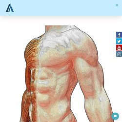 So Your Muscle Are Tight, But Why? - ARC Health & Wellness
