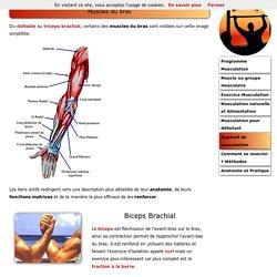 Anatomie pour la musculation
