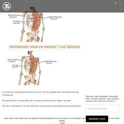 Muscles Spinaux: Anatomie, Renforcement - Studio 3S
