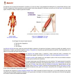 El cuerpo humano. Sistema muscular. Introducción a las Ciencias de la Salud
