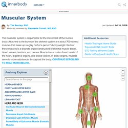 Muscular System - Muscles of the Human Body