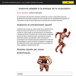 Anatomie et Musculation - Le potentiel biomécanique du corps humain