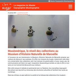 Muséonérique, le réveil des collections au Muséum d'Histoire Naturelle de Marseille