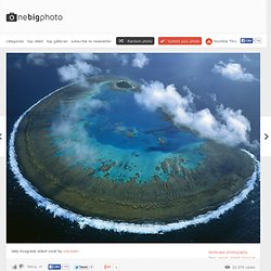 lady musgrave island coral photo | one big photo - Nightly