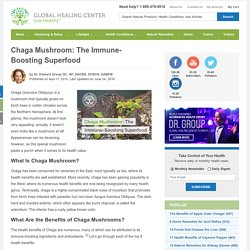 Chaga Mushroom: The Immune-Boosting Superfood