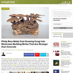 Phillip Ross Molds Fast-Growing Fungi Into Mushroom Building Bricks That Are Stronger than Concrete